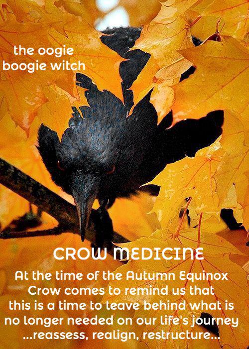 A Bird Medicine