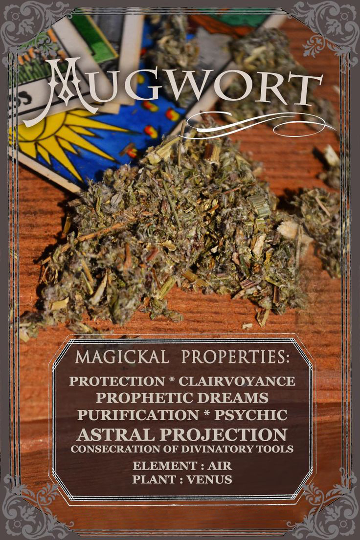 Clairvoyant's Mugwort: Worthy for Purification